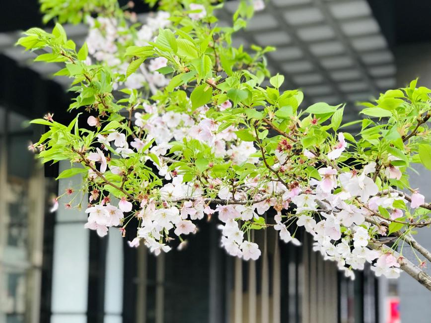 东京成田入境记(3月25日)